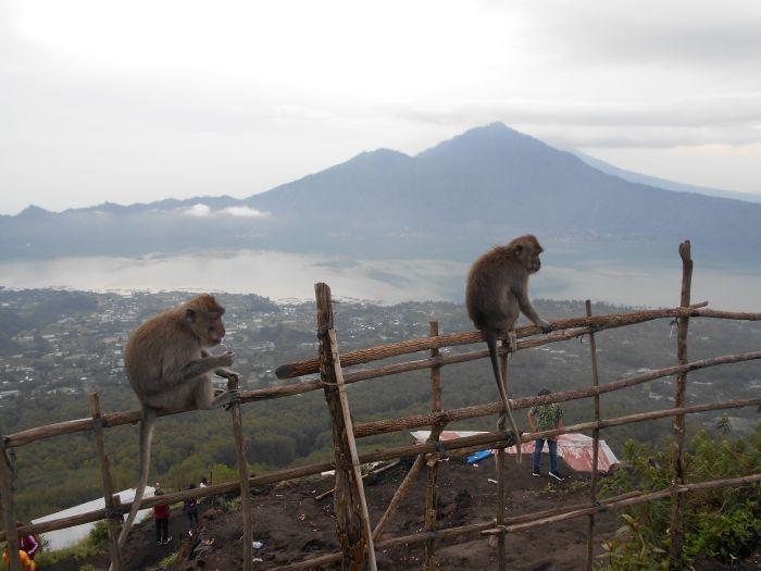 Małpy również zdobyły Wulkan Batur