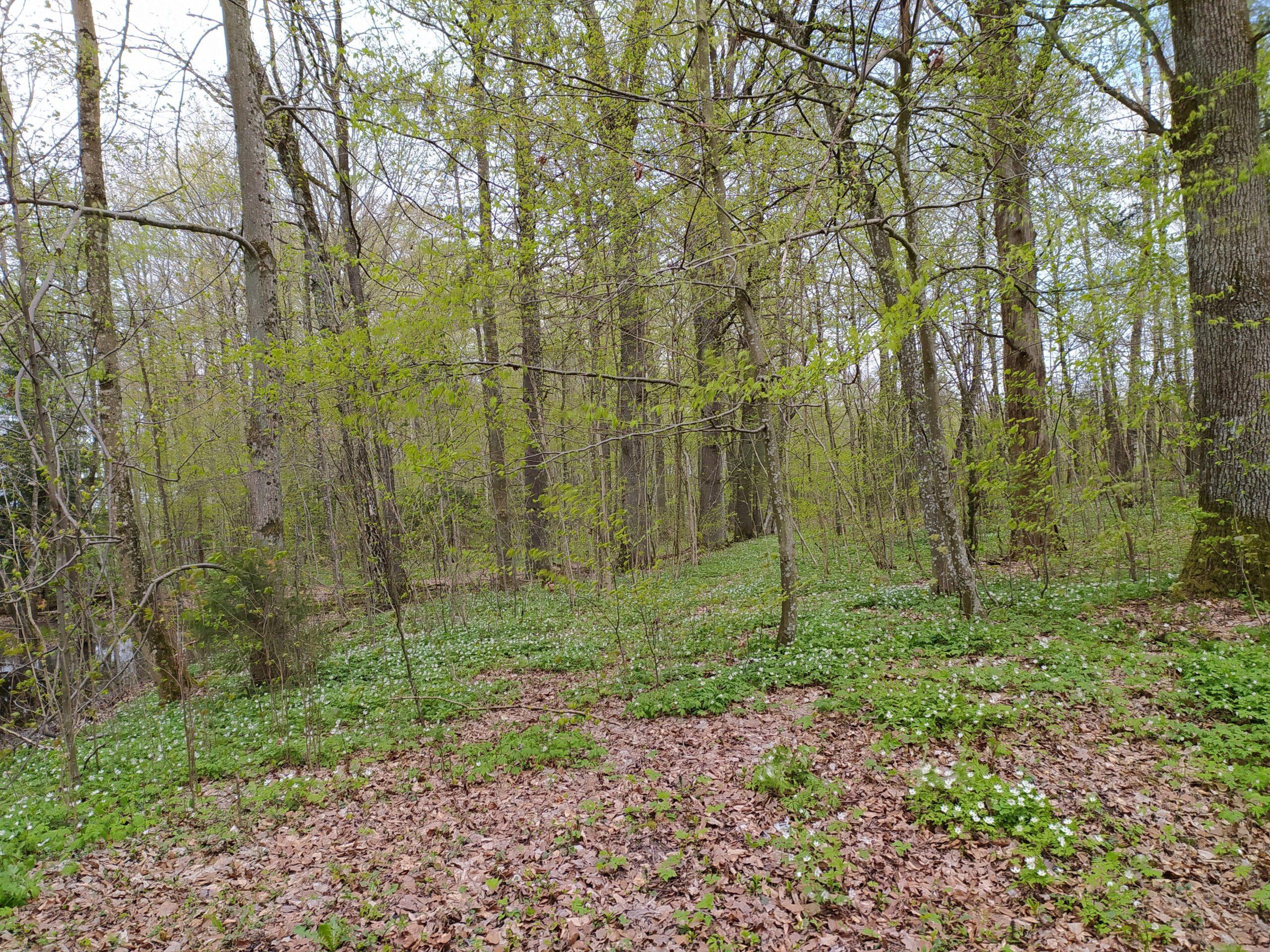 Do Warmińskich lasów zawitała wiosna