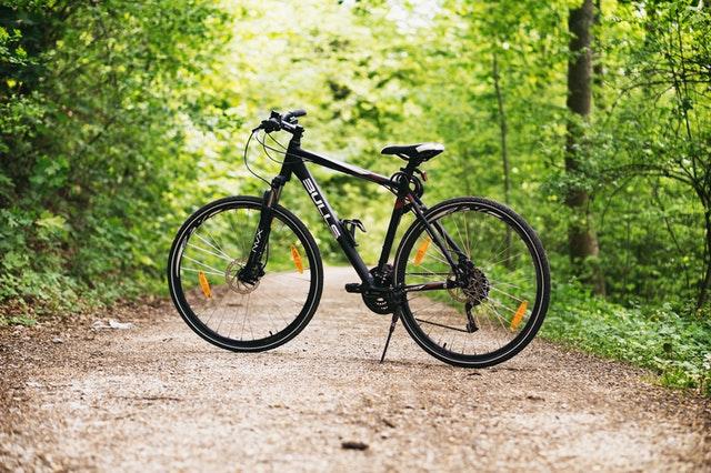 rower w lesie